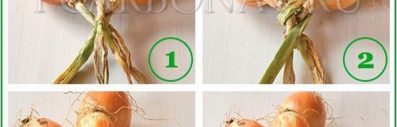 Как правильно плести лук в косы для хранения и сушки - блогфермера