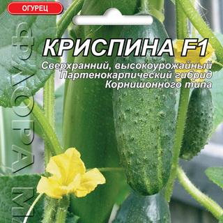 Огурец криспина - особенности и правила выращивания универсального гибрида