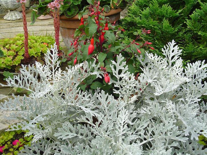 Фотографии и названия низкорослых цветов, виды клумб для них