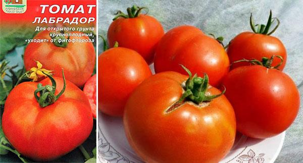 Томат лабрадор: характеристика и описание сорта, урожайность с фото