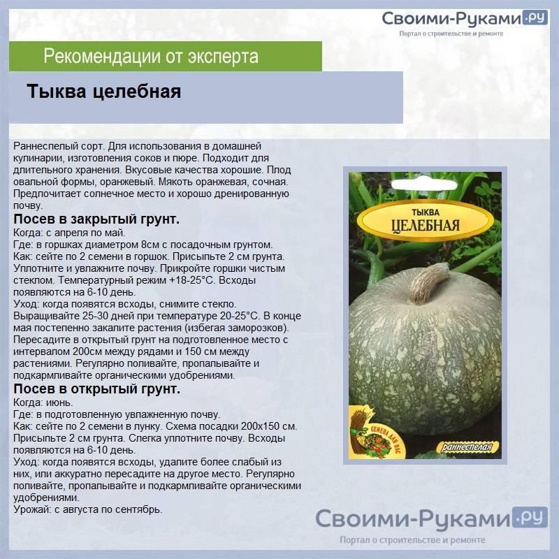 Сорта тыквы - общее описание и классификация