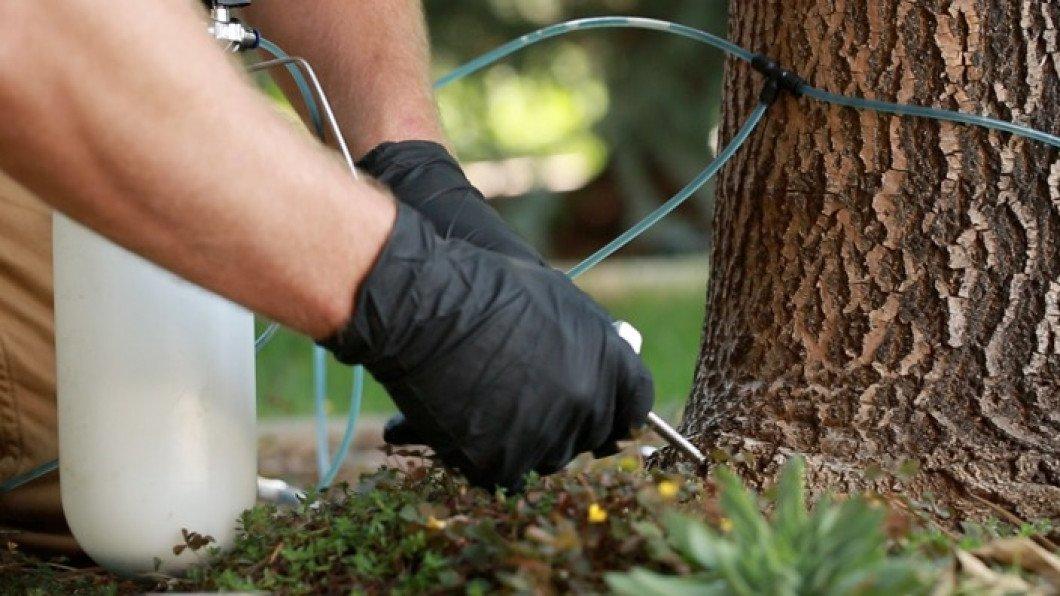 Методы борьбы с короедом на яблоне и лучшие средства для избавления от паразита