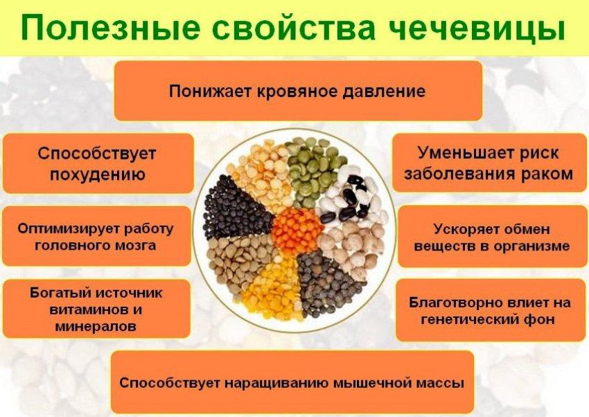 Польза и противопоказания чечевицы для организма человека