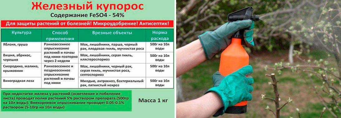 Как обрезать крыжовник чтобы был хороший урожай: подробная инструкция для садоводов
