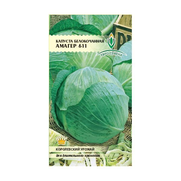 Капуста амагер: схема посадки, характеристика и описание позднего сорта белокочанного овоща, а также пригоден ли данный вид для квашения?