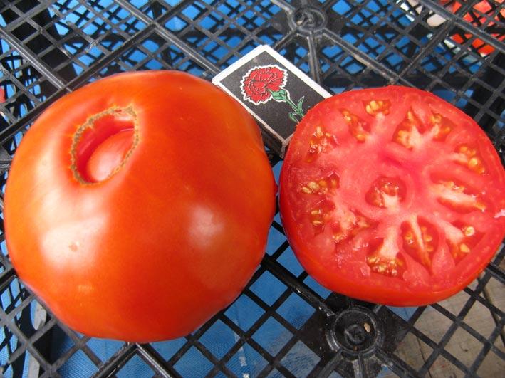 Выращиваем томат «бычий лоб»: описание сорта, фото, рекомендации