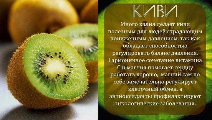 Польза киви — 11 доказанных свойств фрукта для организма человека, а также противопоказания