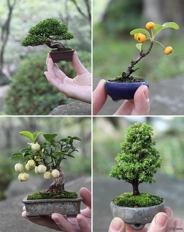 Выбор растения для бонсай
