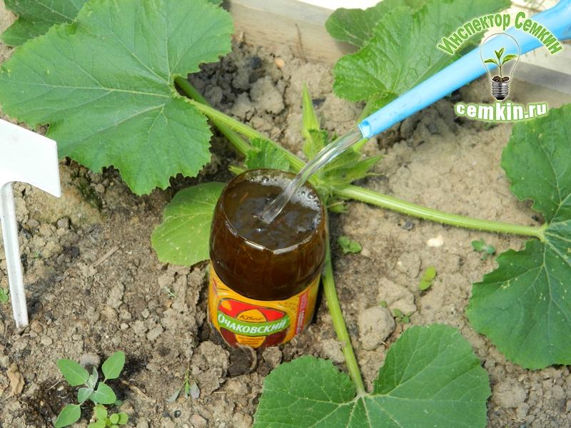 Чем подкормить кабачки в открытом грунте на разных стадиях вегетации