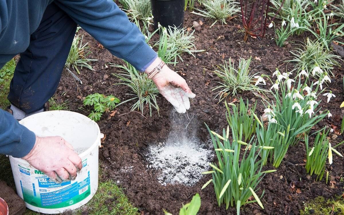 Удобрение почвы весной: какие подкормки вносить и когда?