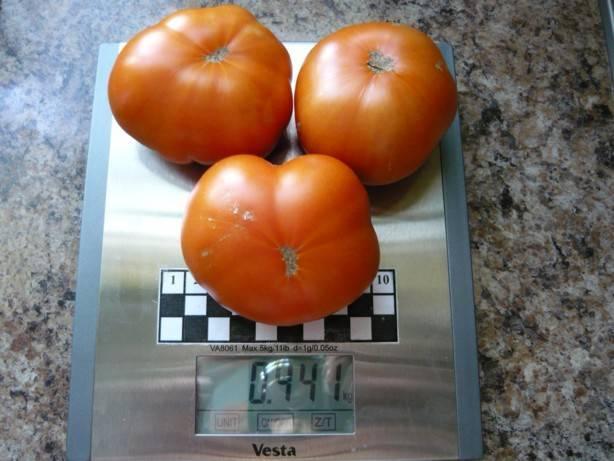 Описание сорта томата tmag 666 f1, характеристика и способы выращивания - всё про сады