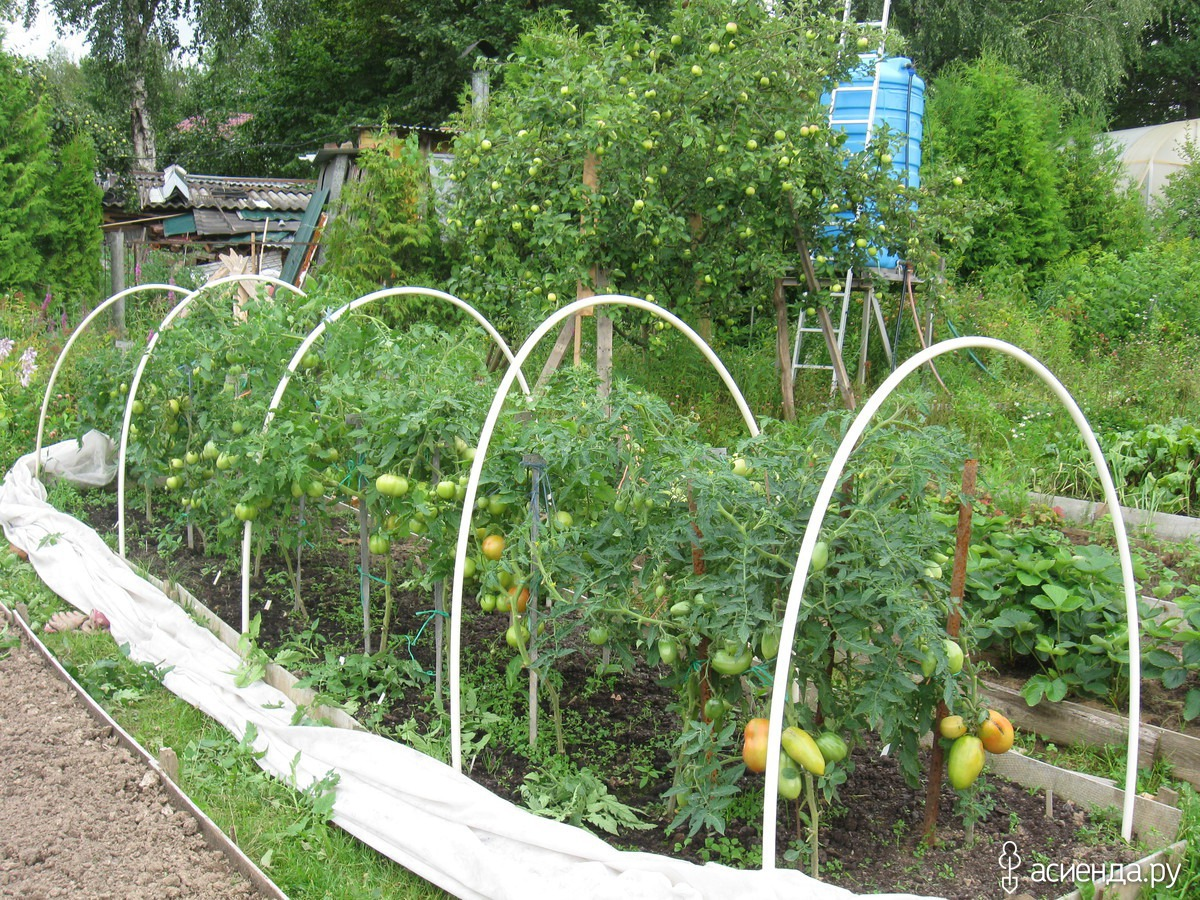 Парник (теплица) для помидоров - своими руками, фото, как сделать, самые лучшие проекты