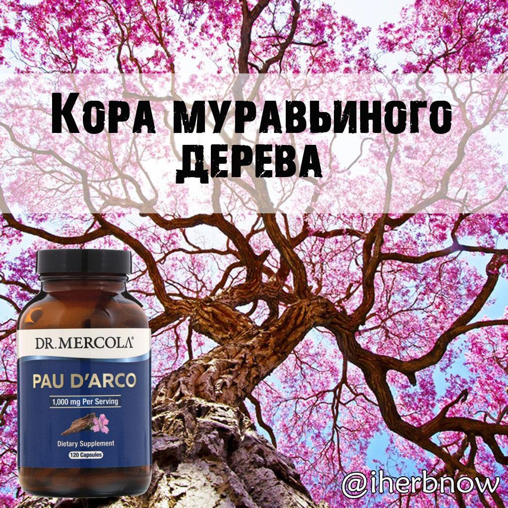 Кора муравьиного дерева: свойства внутреннего слоя, инструкция по применению, противопоказания, как принимать лекарство