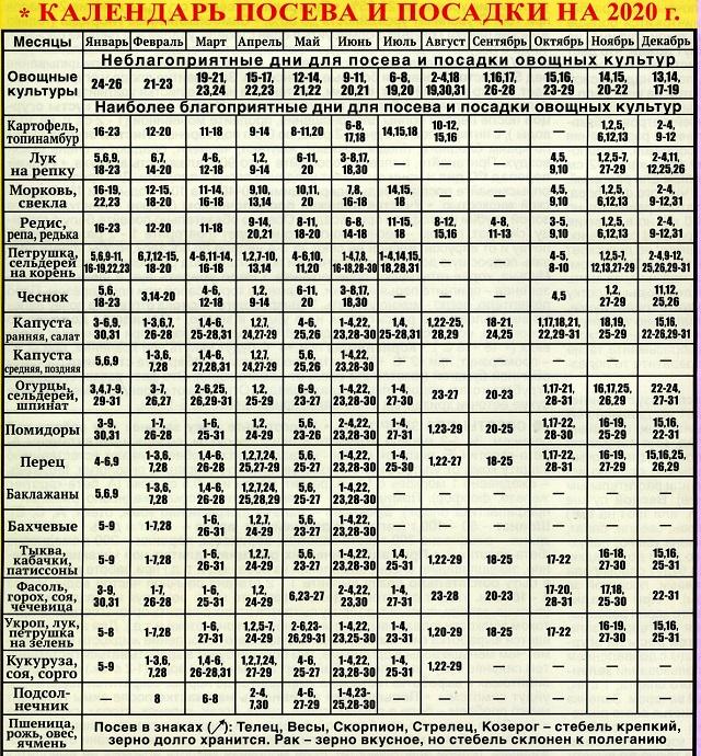 Когда сажать огурцы на рассаду в 2021 году: благоприятные дни по лунному календарю для посадки в грунт, дома и для теплицы с учетом региона