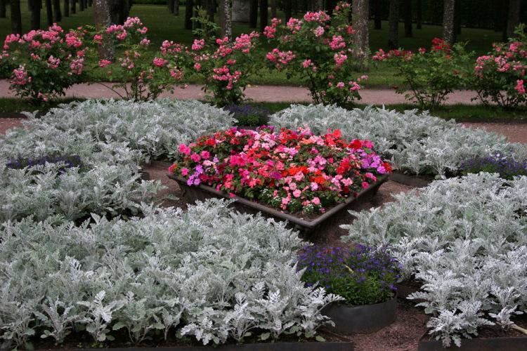 Бордюрные цветы: описание, виды и названия, особенности выращивания, фото