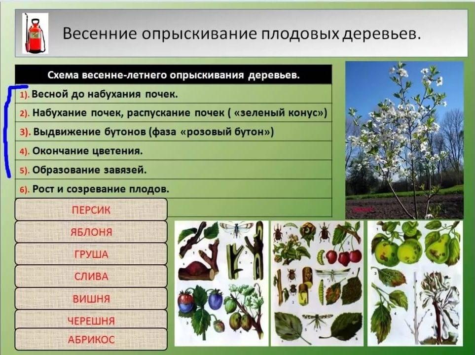 Обработка сада после цветения: чем опрыскивать растения для защиты от вредителей и болезней?