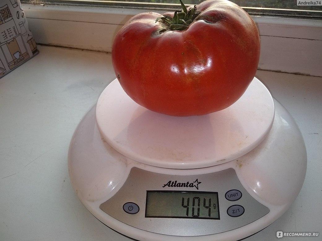 Ранние низкорослые томаты сибирской селекции для открытого грунта
