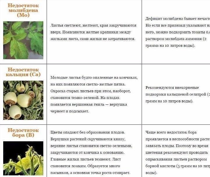 Первая обработка. как обезопасить сад от вредителей и болезней весной | дача | cвободное время | аиф аргументы и факты в беларуси