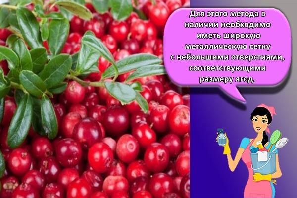 ✅ как сохранить бруснику без заморозки - питомник46.рф