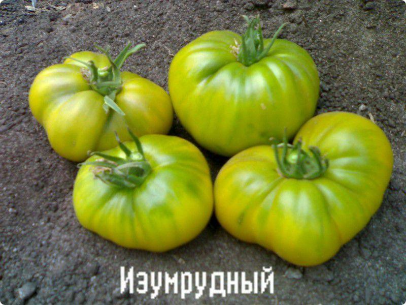 Изумрудное яблоко: томат для гурманов. описание сорта и рекомендации по выращиванию