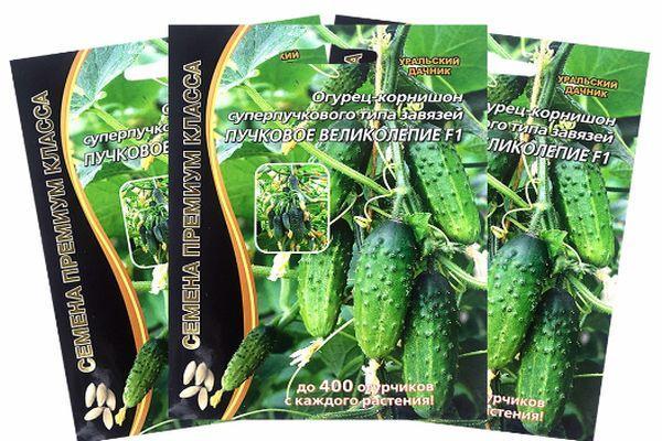 Огурец пучковое великолепие f1: отзывы, фотографии и видео, выращивание и уход