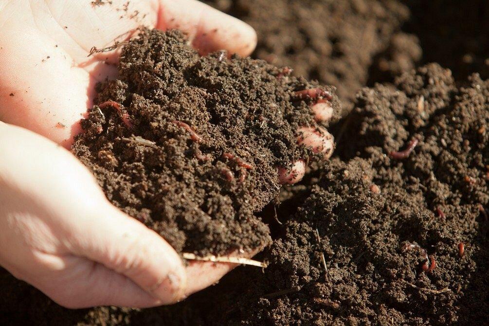 Что такое плодородие почвы | дачная жизнь