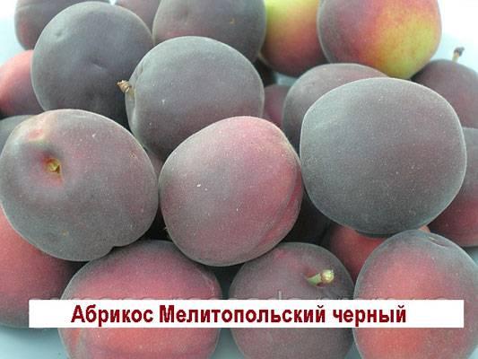 Сорта абрикоса для средней полосы россии: фото и характеристика