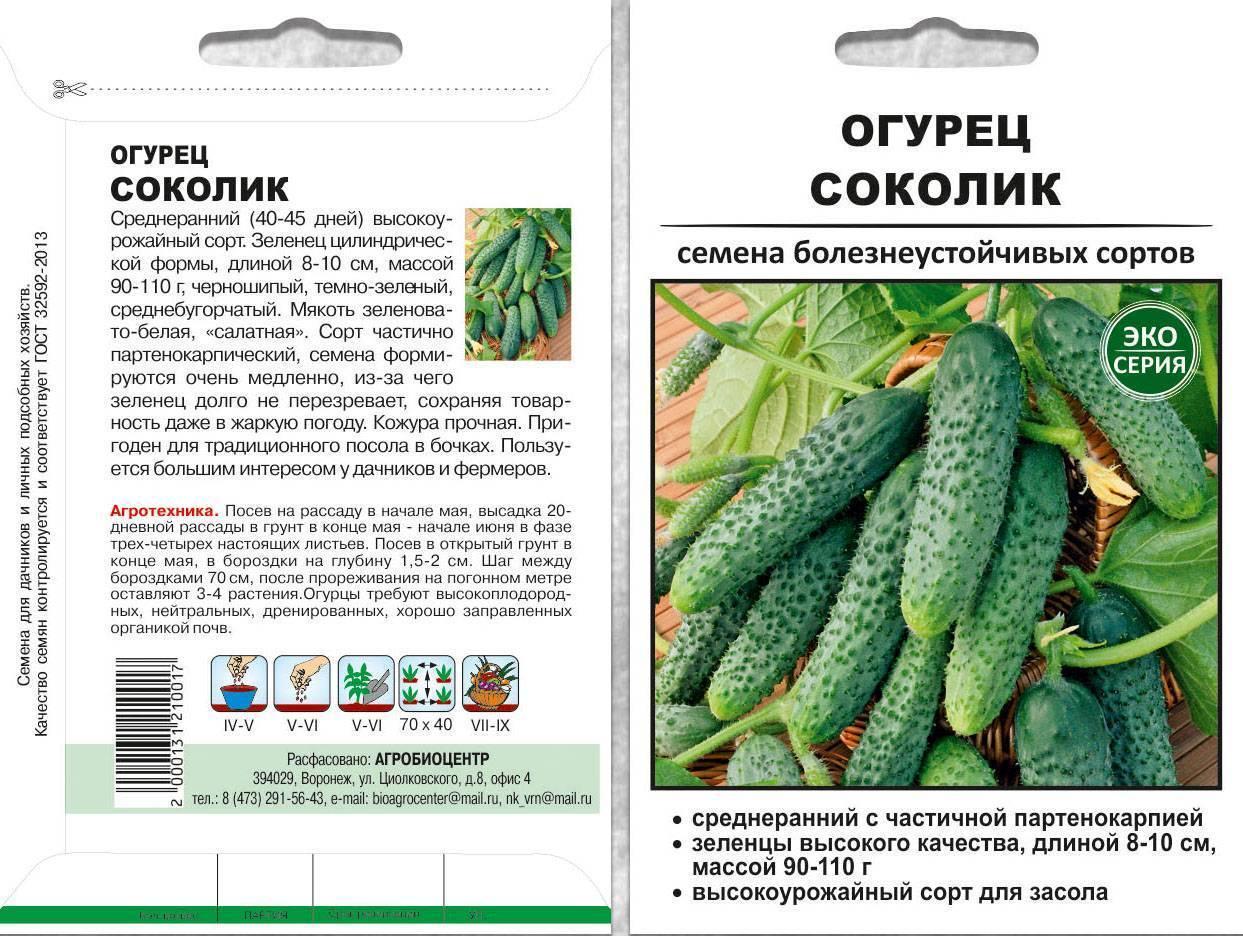 Пучковые огурцы для открытого грунта и теплиц: выращивание и формирование суперпучковых сортов