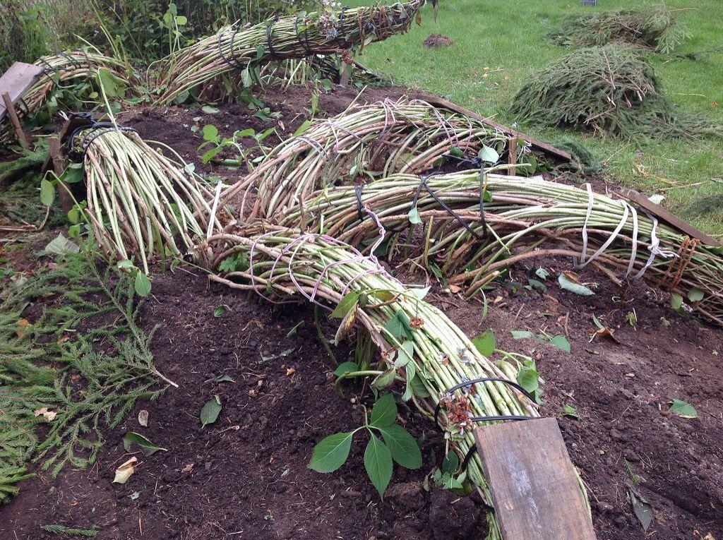 Уход за хостой осенью и правильная подготовка растения к зиме