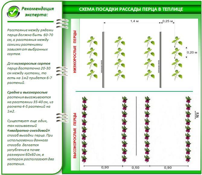 Уход за огурцами в открытом грунте: от посадки до сбора урожая
