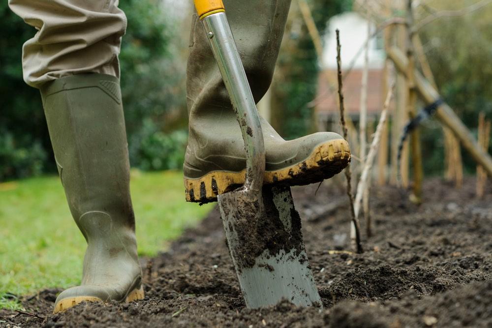 Зачем перекапывать почву осенью, и когда лучше не копать? фото — ботаничка.ru