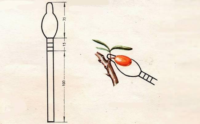 Инструменты и приспособления для быстрой и удобной уборки урожая ягод облепихи