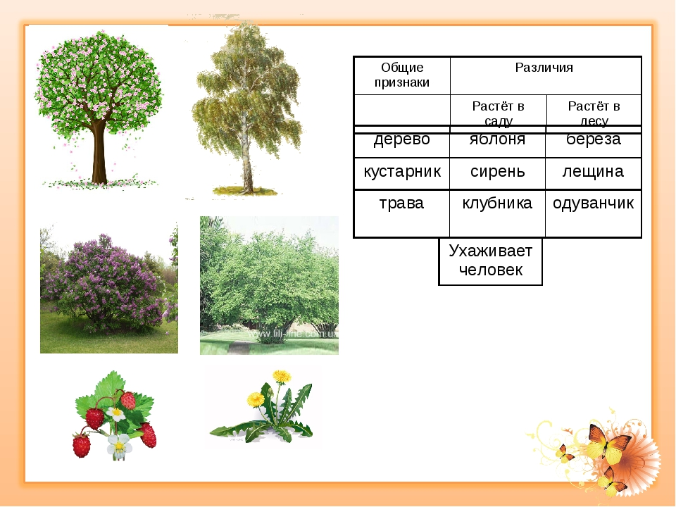 Многолетние цветущие и вечнозеленые кустарники для сада и дачи