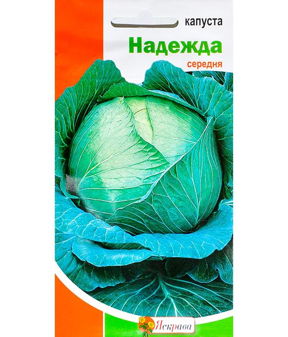 Подробная характеристика капусты надежда и описание правил выращивания сорта