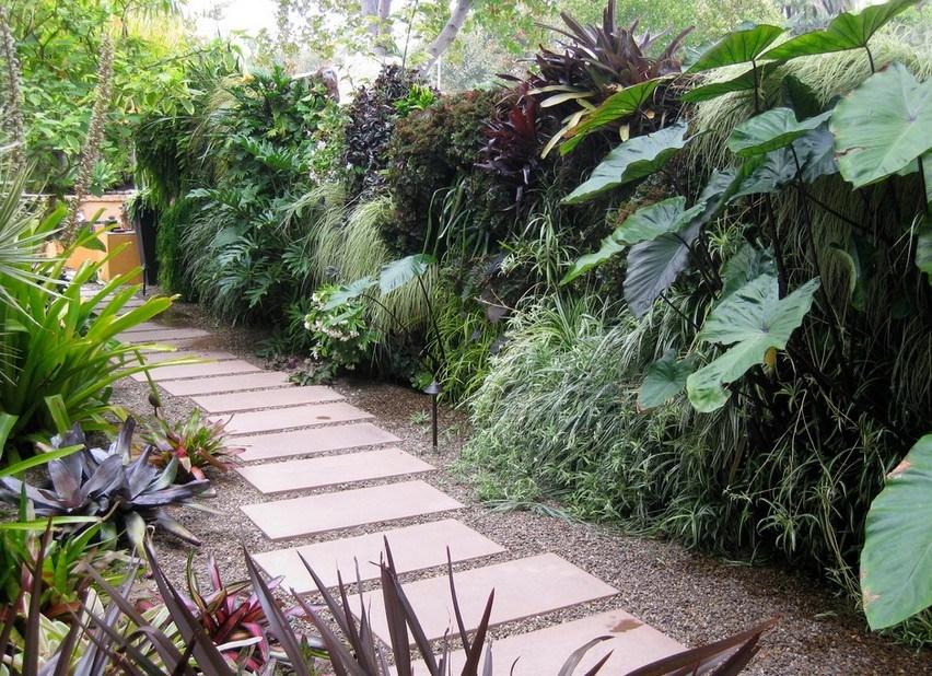 Как размножить бамбук: способы размножения, нюансы посадки, выращивание и рекомендации по уходу