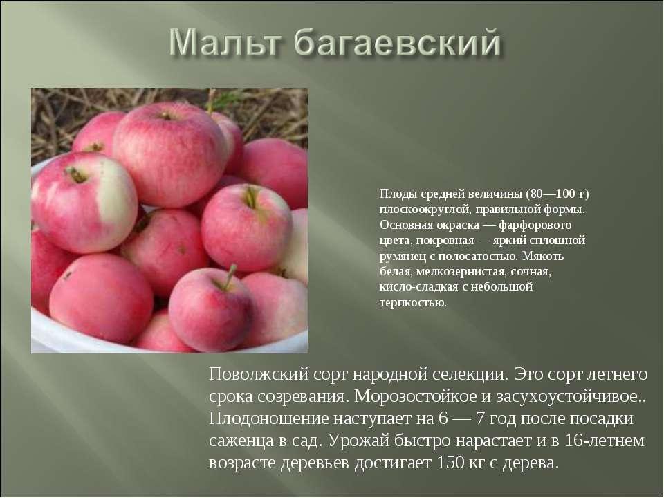 Сорт яблни фуджи — особенности выращивания и ухода