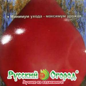 """Томат """"золотые купола"""": описание сорта, характеристики помидоров, фото русский фермер"""