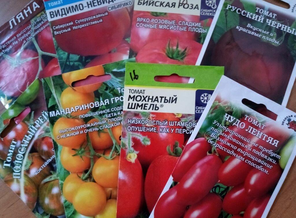 Томат мохнатый шмель - описание сорта, характеристика, урожайность, отзывы, фото