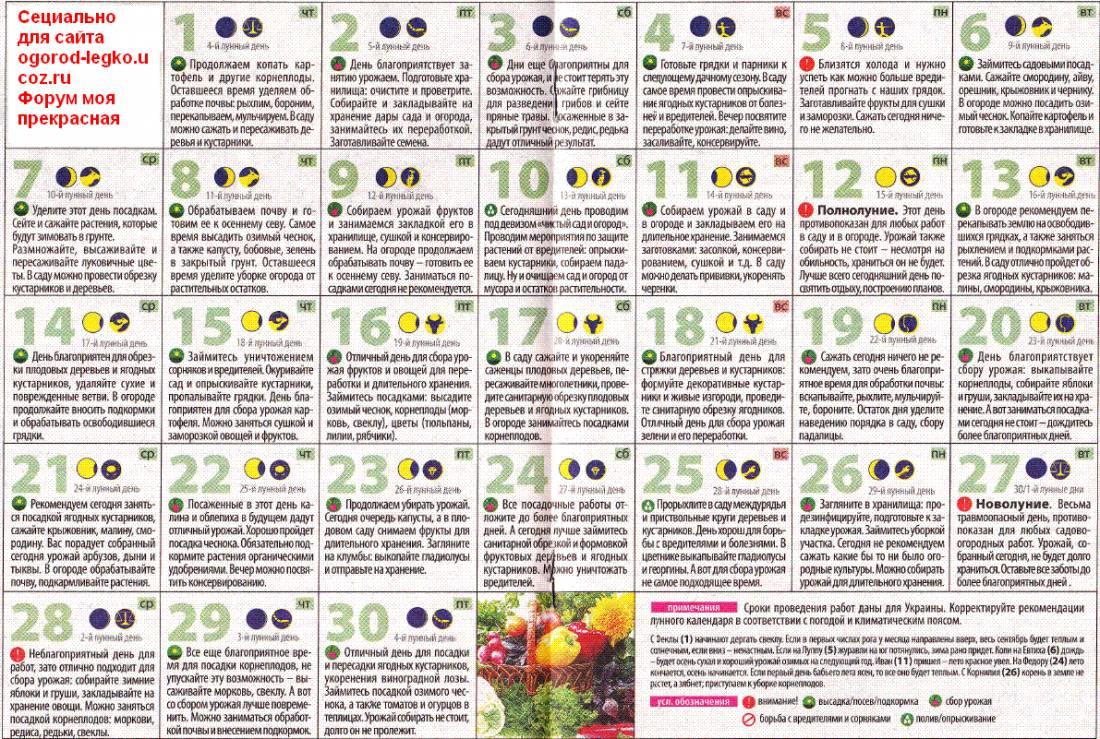 Посадка моркови в июне 2020 в открытый грунт семенами: 7 способов посева