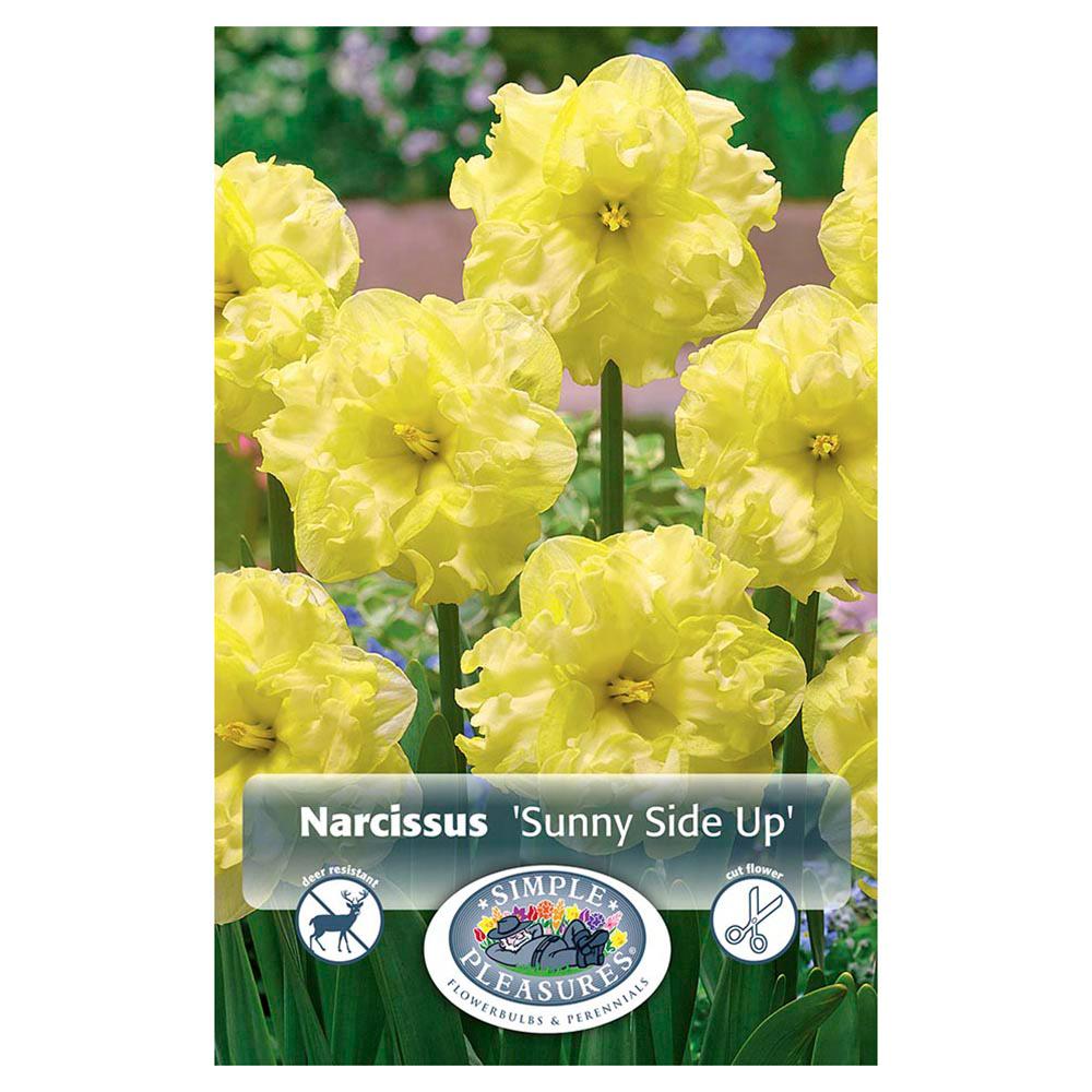 Нарцисс пинк вандер: описание и характеристики сорта, правила выращивания