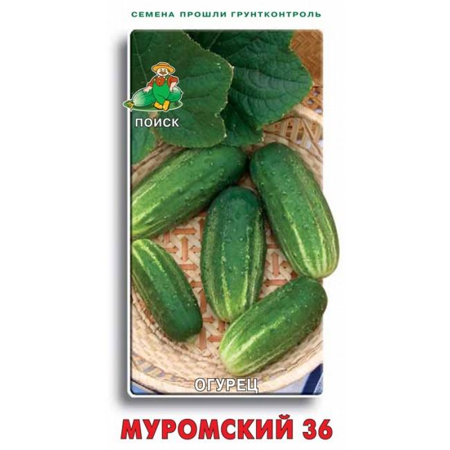 Огурцы муромский 36: отзывы, описание и фотографии сорта, посадка, выращивание и уход, урожайность