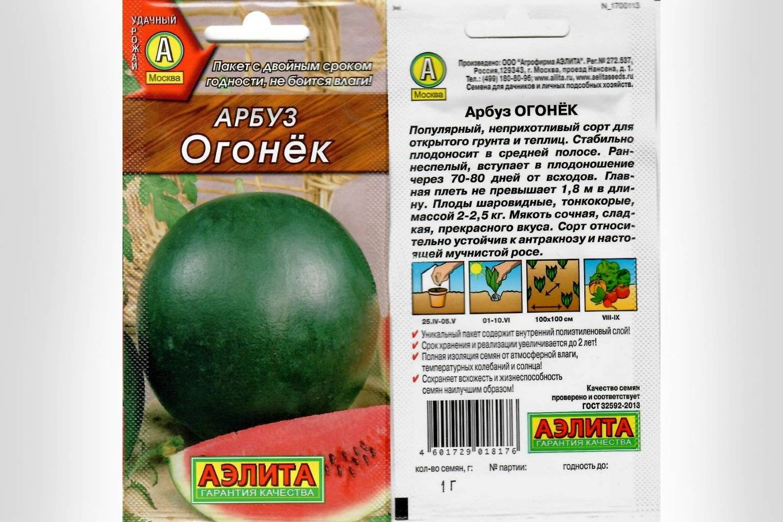 Лучшие сорта арбузов для средней полосы - дачные советы.ру