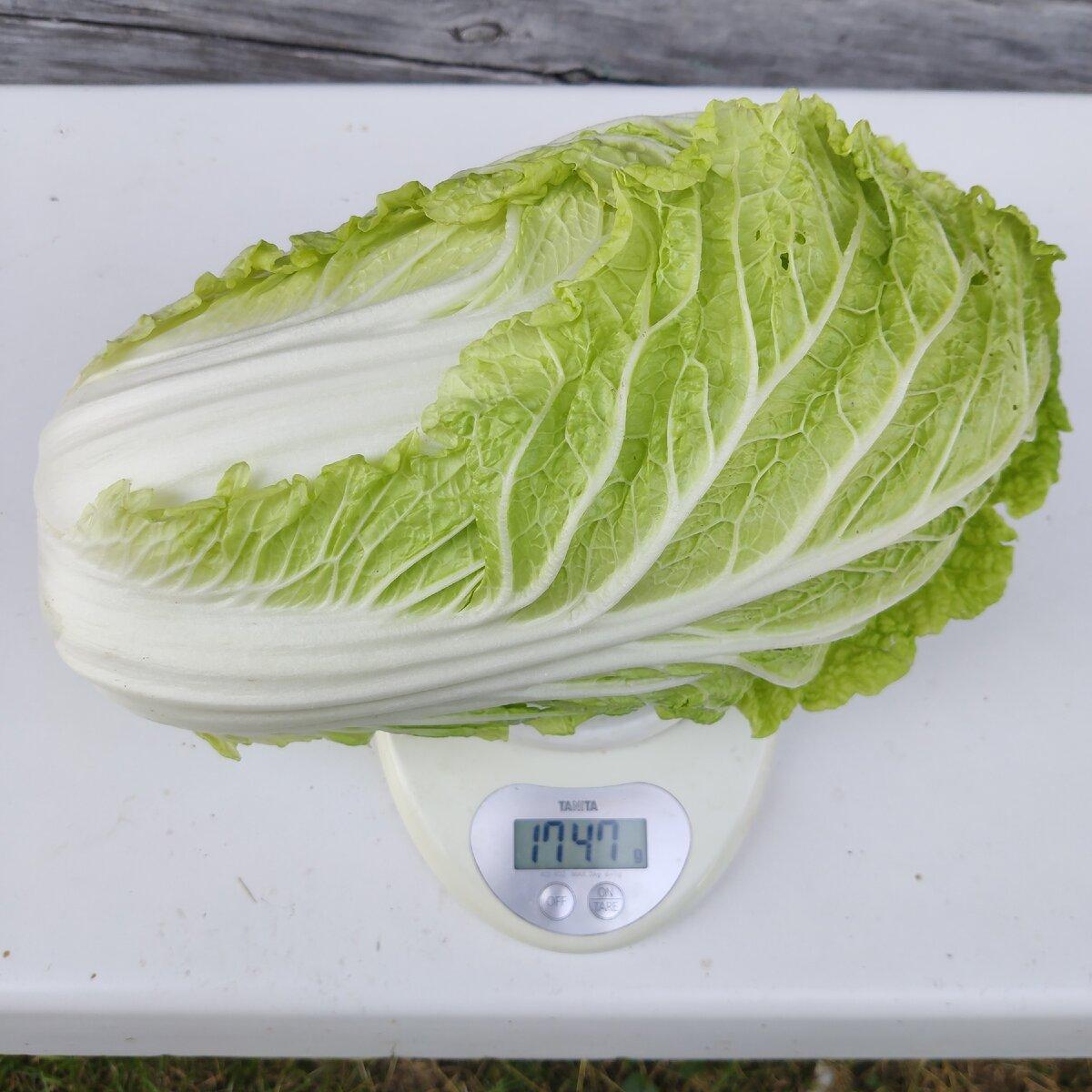 Лучшие сорта бело- и краснокочанной капусты, с фото и описанием
