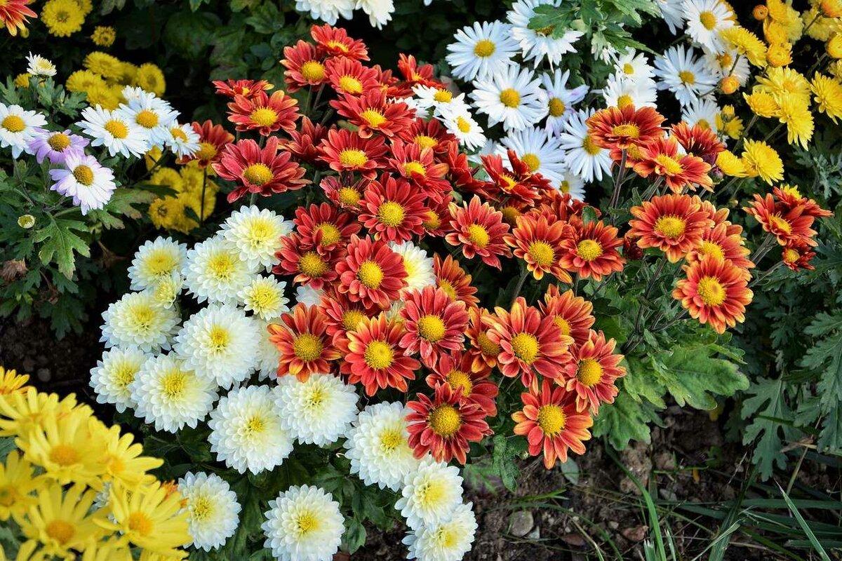Фото и названия растений-многолетников для урала и сибири, цветущих все лето: подбираем цветы для клумб и миксбордеров