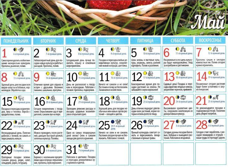 Календарь-подсказка по посадке картофеля, свеклы, моркови и других корнеплодов + лунный календарь на 2021