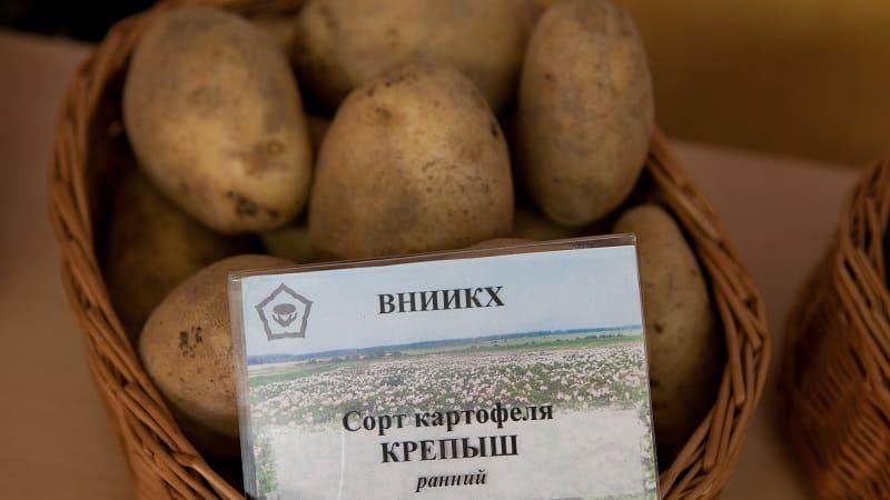 """Описание и характеристика картофеля""""чародей"""""""