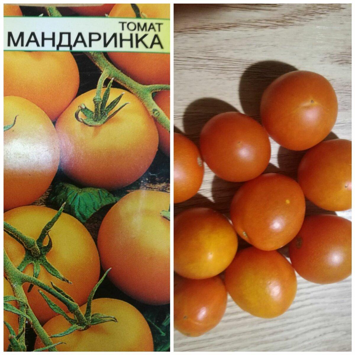 Томат малиновка: характеристика и описание сорта, отзывы, фото, урожайность