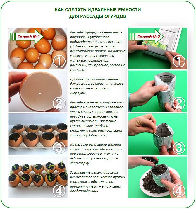 """Как получить семена из огурцов своими руками? - журнал """"совхозик"""""""