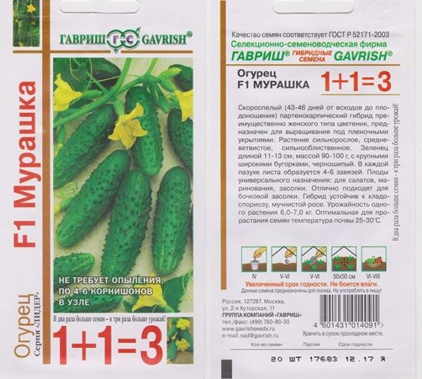 Описание и характеристики сорта огурцов Мурашка, выращивание и уход