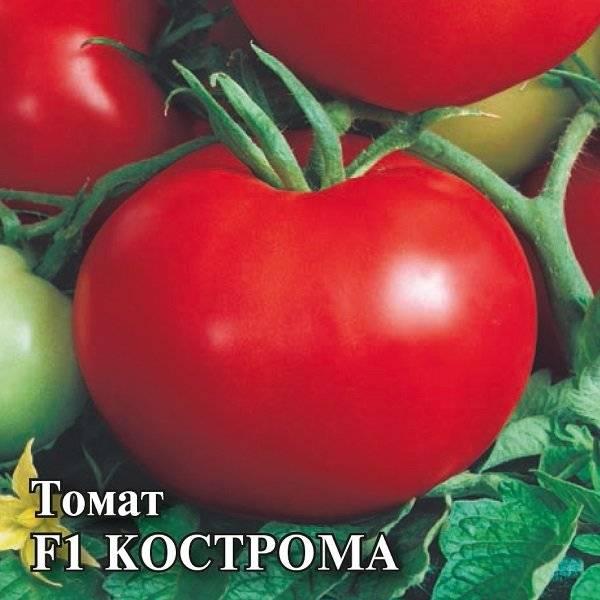 Томат кострома f1: отзывы, характеристика и описание сорта, фото, урожайность